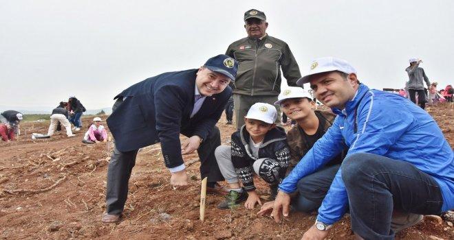 Akhisar'da binlerce fidan toprakla buluştu