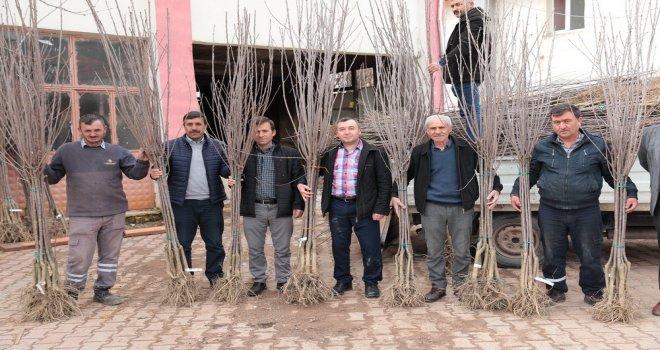 Akhisarlı Çiftçiye İlk Aşamada Bin 200 Fidan Dağıtıldı