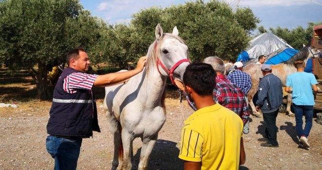 Atlar Kayıt Altına Alınıp Kimlik Belgesi Düzenleniyor