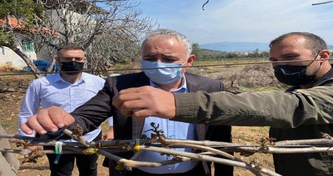 Bakırlıoğlu Don Afetinin Vurduğu Bağları İnceledi
