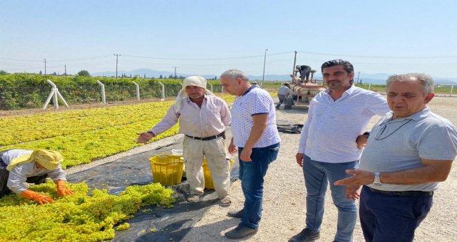 Bakırlıoğlu; ''Üzüm Üreticisi Fiyat Bekliyor''