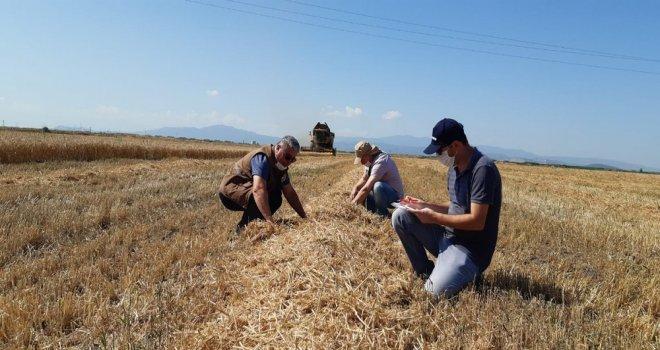 Buğday Üretiminin Her Aşamasında İlçe Tarım Var