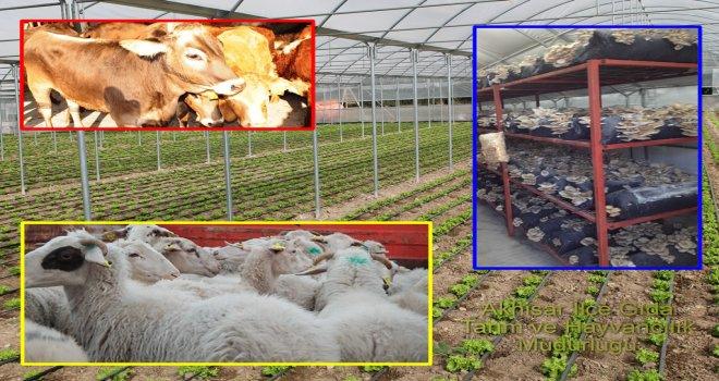 Genç Çiftçiye 30 Bin TL Hibe
