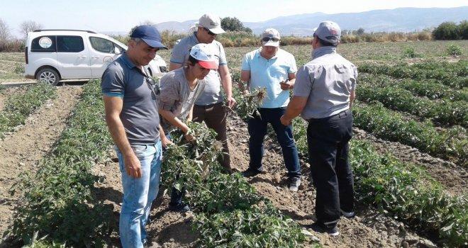 İlçe Tarımdan Sebze Üreticilerine Uyarı!