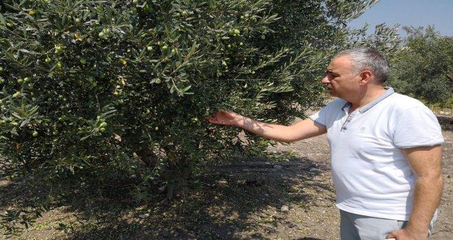 Milletvekili Bakırlıoğlu; ''Tarım İpotek Altında''