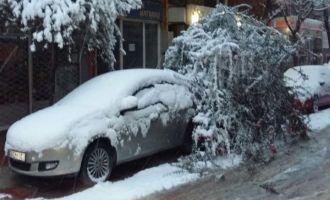 Ağaçlar yoğun kar yağışına dayanamadı