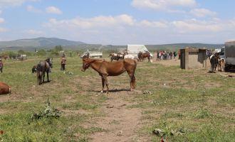 Akhisar At Panayırına büyük ilgi