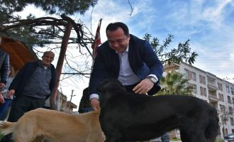 Başkan Dutlulu, sokak hayvanları için düğmeye bastı