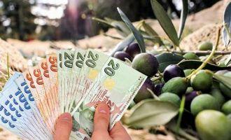 Dane Zeytin Fark Ödemesi Desteği Başlıyor