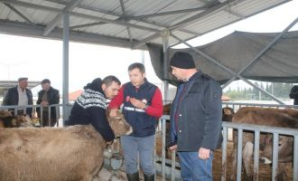 Genç Çiftçilere Proje Kapsamında Büyükbaş Hayvan Teslimi Yapıldı