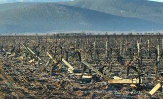 Sazoba ve Beyobalı çiftçilerin bağlarına sabotaj