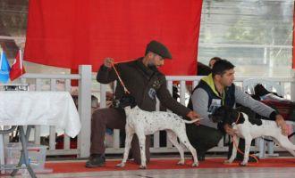 Uğur Leylek, 3 köpeği ile İzmir'de 7 derece elde etti